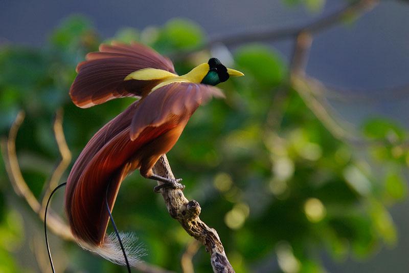 5 Jenis Burung Langka Dan Hampir Punah Di Indonesia Urban Www Indonesiana Id