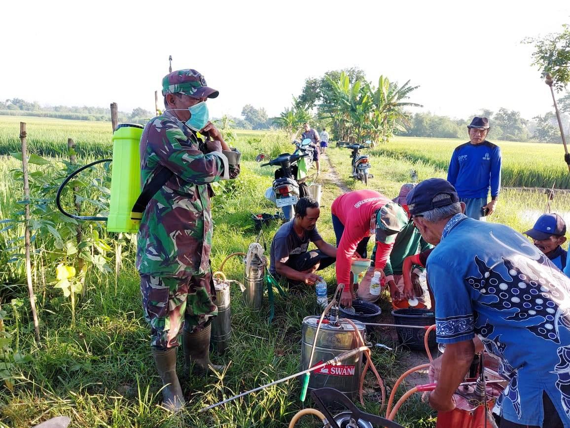 Babinsa Sumberkarang Koramil Dlanggu Sertu Mochammad Sholeh bareng bersama BPP, Petugas POPT, PPL dan Poktan lakukan penyemprotan tanaman padi, antisipasi hama WBC