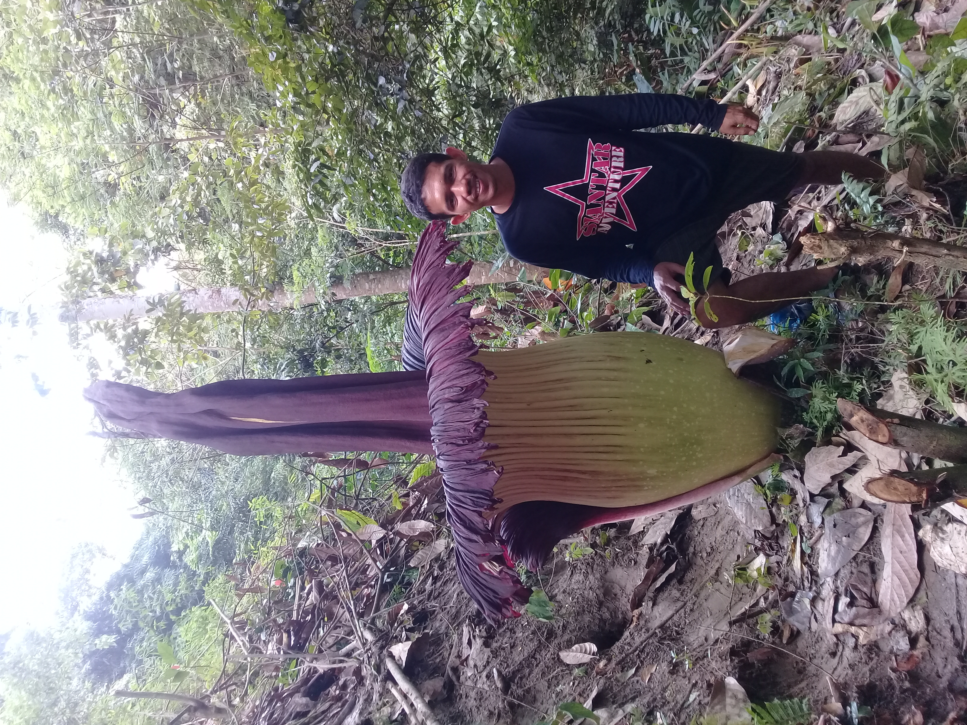 Mengenal Bunga Bangkai Raksasa Amorphophallus Titanum Gaya Hidup Www Indonesiana Id